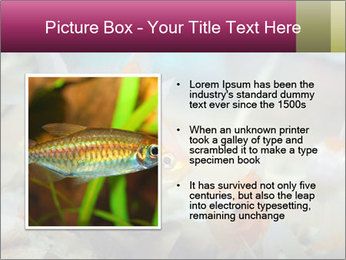 0000084701 PowerPoint Template - Slide 13