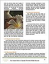 0000084832 Word Templates - Page 4