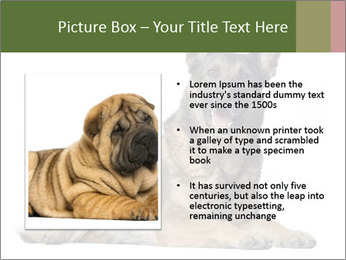 0000084871 PowerPoint Templates - Slide 13