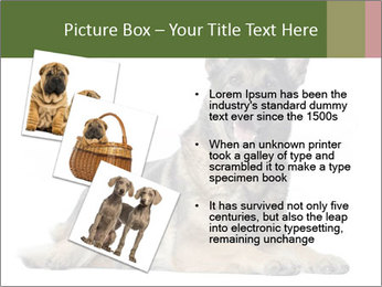 0000084871 PowerPoint Templates - Slide 17
