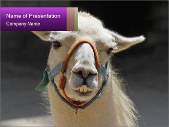0000084887 PowerPoint Template - Slide 1