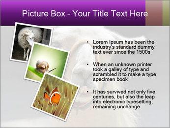 0000084887 PowerPoint Template - Slide 17