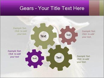0000084887 PowerPoint Template - Slide 47