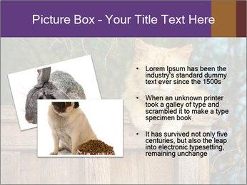 0000084900 PowerPoint Template - Slide 20