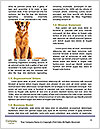 0000084912 Word Template - Page 4