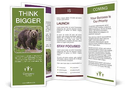 0000084966 Brochure Templates