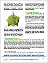 0000085004 Word Template - Page 4