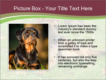 0000085095 PowerPoint Template - Slide 13