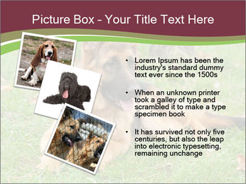 0000085095 PowerPoint Template - Slide 17