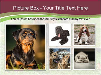 0000085095 PowerPoint Template - Slide 19