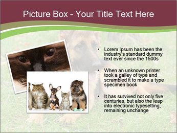 0000085095 PowerPoint Template - Slide 20