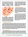 0000085101 Word Templates - Page 4
