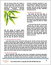 0000085180 Word Templates - Page 4