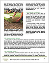 0000085194 Word Template - Page 4