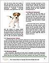 0000085224 Word Template - Page 4