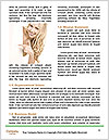 0000085239 Word Templates - Page 4