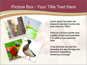 0000085275 PowerPoint Template - Slide 23