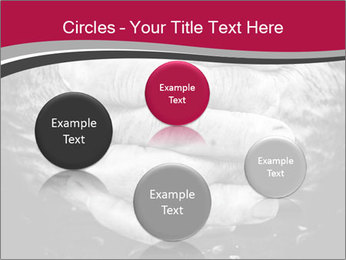 0000085291 PowerPoint Template - Slide 77