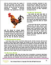 0000085303 Word Templates - Page 4