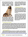 0000085334 Word Template - Page 4
