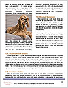 0000085363 Word Templates - Page 4