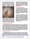 0000085387 Word Templates - Page 4