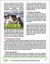 0000085514 Word Templates - Page 4