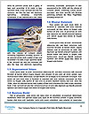 0000085532 Word Templates - Page 4