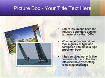 0000085560 PowerPoint Templates - Slide 20
