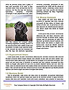0000085560 Word Templates - Page 4