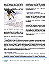 0000085564 Word Templates - Page 4