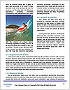 0000085565 Word Templates - Page 4