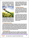 0000085590 Word Template - Page 4
