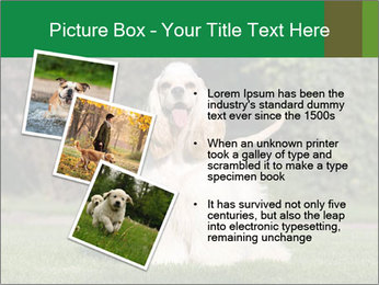 0000085599 PowerPoint Template - Slide 17