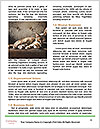 0000085650 Word Template - Page 4