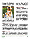 0000085664 Word Templates - Page 4