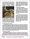 0000085681 Word Templates - Page 4