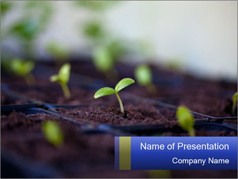 0000085776 PowerPoint Template