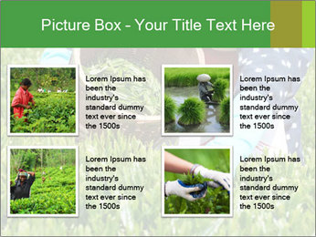 0000085784 PowerPoint Template - Slide 14