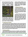 0000085874 Word Templates - Page 4