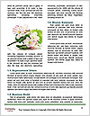 0000085890 Word Templates - Page 4