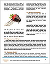 0000085949 Word Templates - Page 4
