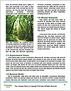 0000085965 Word Templates - Page 4