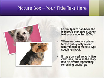 0000086024 PowerPoint Template - Slide 20