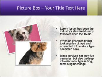 0000086024 PowerPoint Templates - Slide 20
