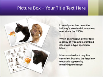 0000086024 PowerPoint Template - Slide 23