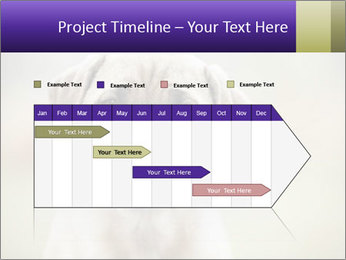 0000086024 PowerPoint Template - Slide 25
