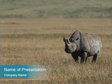 Black Rhino in Ngorongoro Crater PowerPoint Templates