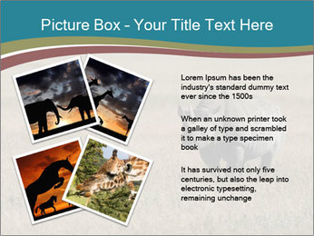 Black Rhino in Ngorongoro Crater PowerPoint Templates - Slide 23