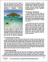 0000086087 Word Template - Page 4